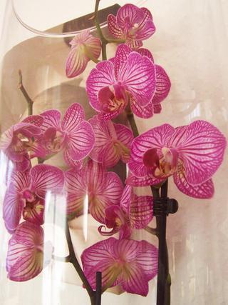die sch nsten orchideen bilder seite 4 foto treff. Black Bedroom Furniture Sets. Home Design Ideas