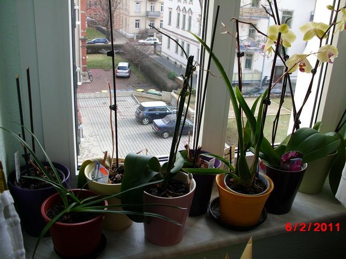orchidee tot oder lebendig pflegen schneiden. Black Bedroom Furniture Sets. Home Design Ideas