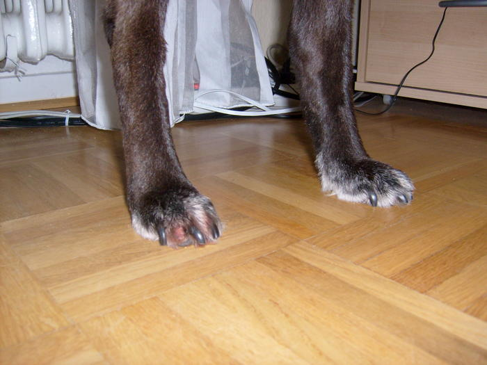 Hund hat einen wunden Anus