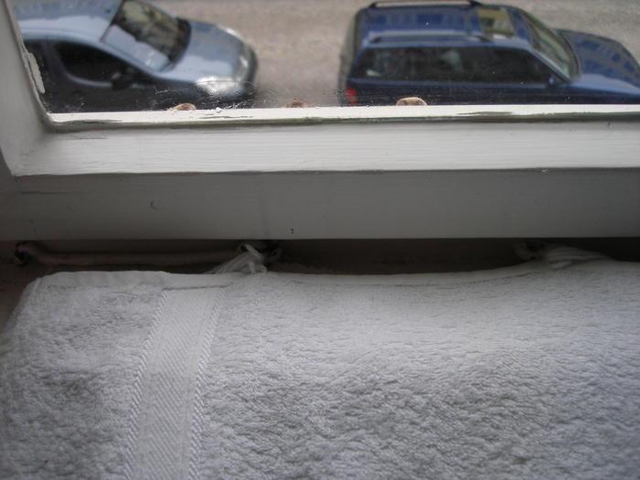 Handtuch-Fensterbank-Decke - Katzen Forum