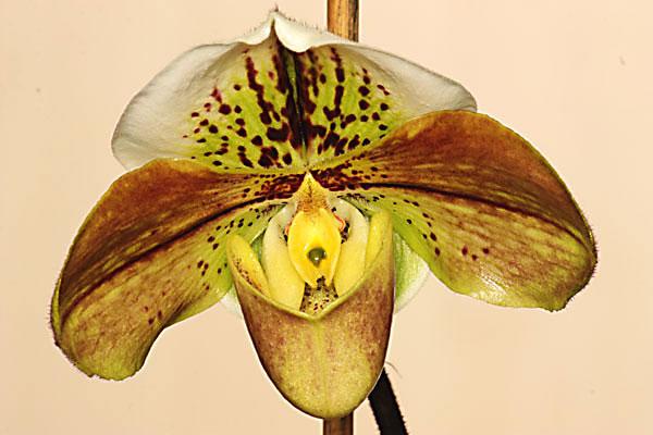 die sch nsten orchideen bilder seite 6 foto treff. Black Bedroom Furniture Sets. Home Design Ideas