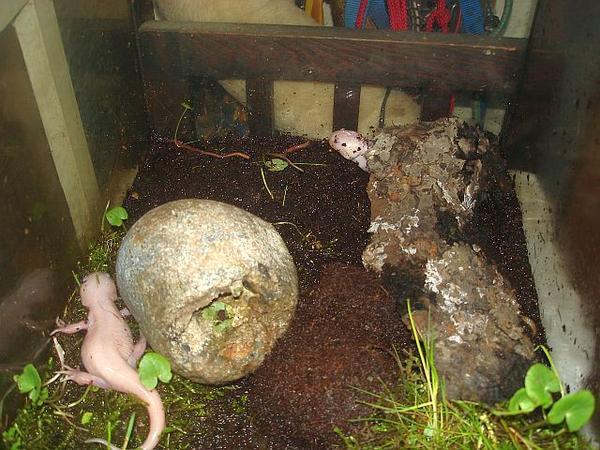 landg nger temperatur und lf axolotl landg nger das gro e axolotlforum. Black Bedroom Furniture Sets. Home Design Ideas