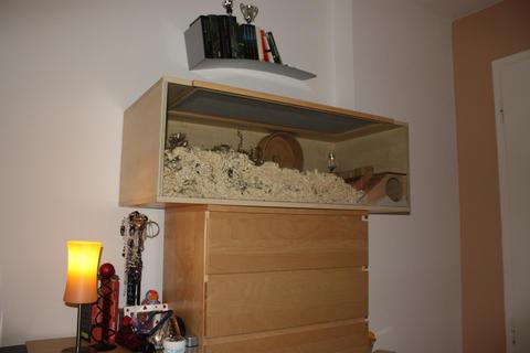 wie kann ich mein zimmer f r die katzen umgestalten katzen forum. Black Bedroom Furniture Sets. Home Design Ideas