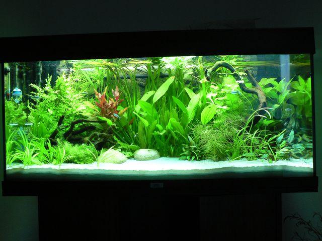 co2 neuling braucht mal hilfe aquarium forum. Black Bedroom Furniture Sets. Home Design Ideas
