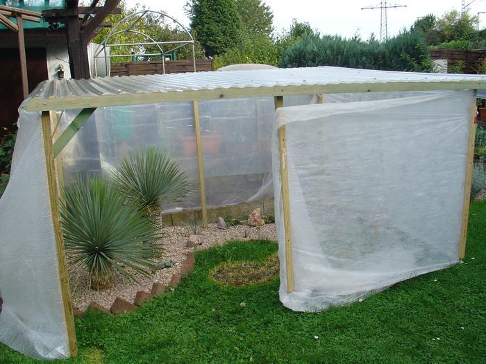 yuccas agaven co yucca rostrata nach dem winter. Black Bedroom Furniture Sets. Home Design Ideas
