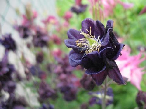 Zeigt her eure blumen eure blumenfotos aus garten und zimmer for Blumenerde in mikrowelle