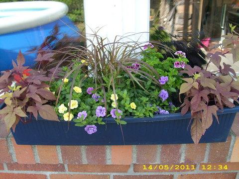 zeigt her eure bepflanzten balkonk sten mein sch ner. Black Bedroom Furniture Sets. Home Design Ideas