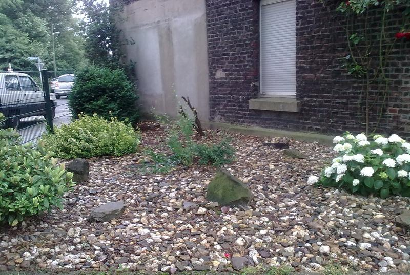 vorgarten neu gestalten - 3 jahre später - seite 1, Gartenarbeit ideen