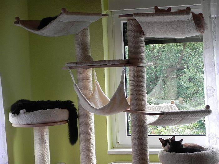 katzen forum zeigt her eure katzengl ck kratzb ume. Black Bedroom Furniture Sets. Home Design Ideas