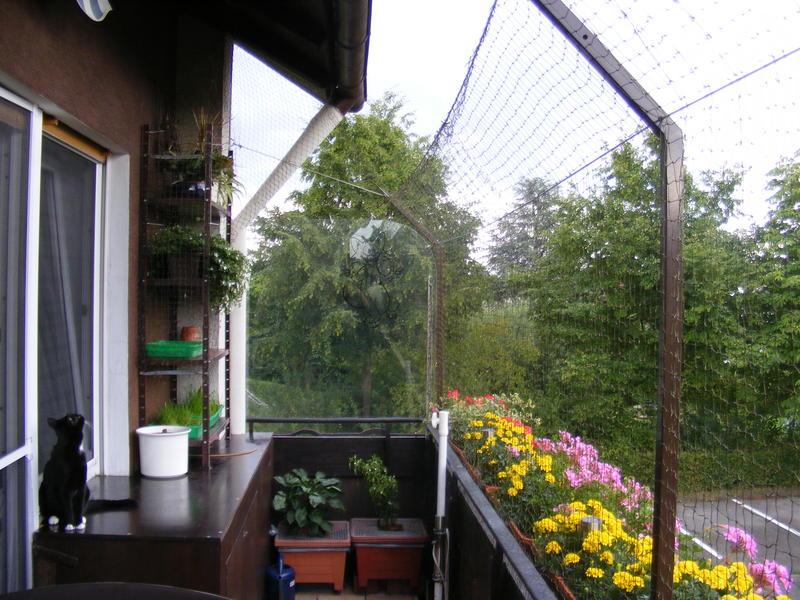 Zeigt her eure gesicherten balkone auslaufe gehege for Markise balkon mit sterne tapete die leuchtet