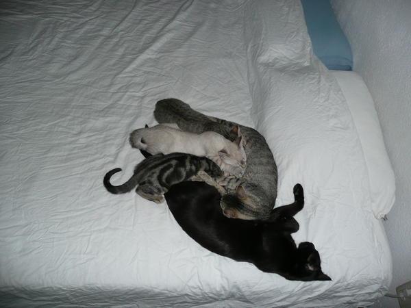 ab wann kitten weggeben 3 monate oder spaeter seite 3. Black Bedroom Furniture Sets. Home Design Ideas
