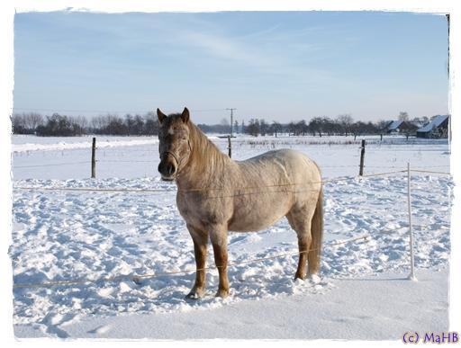 wie kriegen pferde fohlen