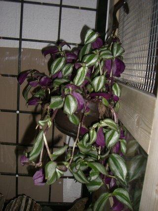 tierplanet aus liebe zum tier thema anzeigen zimmerpflanzen zur f tterung. Black Bedroom Furniture Sets. Home Design Ideas