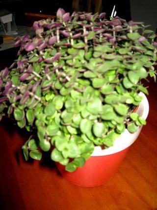 Pflanzen sammlthread verf tterbare zimmerpflanzen - Kleine zimmerpflanzen ...