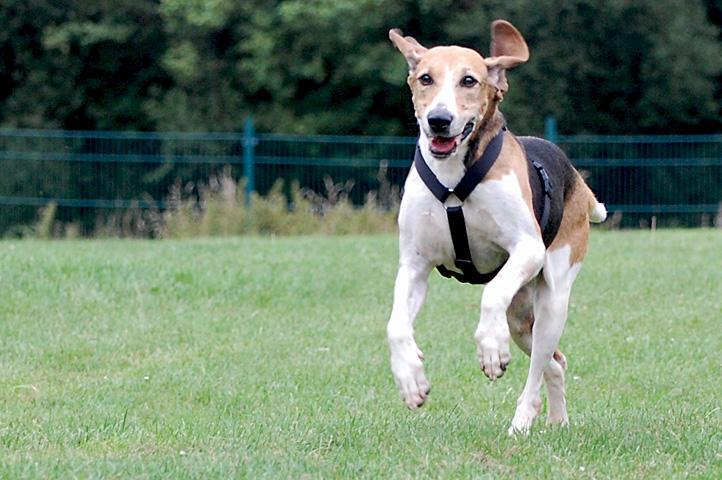 Nouvelles chiens partis le 29 juillet pour l'Allemagne 7801558euk