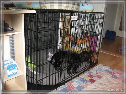 hundebox foto das alternative hundeforum. Black Bedroom Furniture Sets. Home Design Ideas