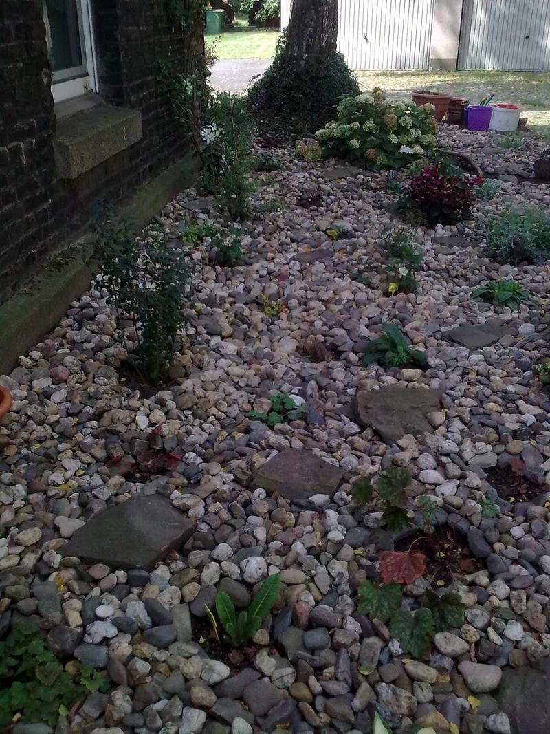 vorgarten neu gestalten - 3 jahre später - page 5 - mein schöner, Garten und bauen
