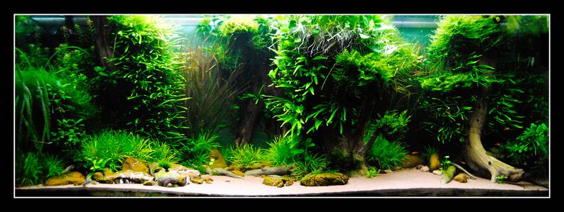 540L Hochwasserbecken 150x60x60 - Seite 6 - Aquarium Forum