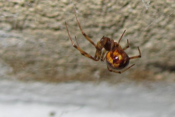 Spinnen - Was macht ihr? - Seite 5 8145847blx