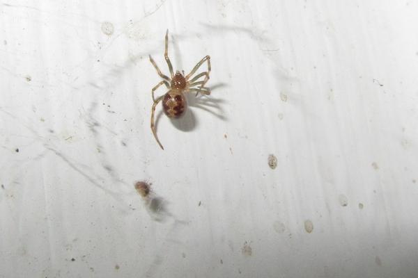 Spinnen - Was macht ihr? - Seite 5 8145849rwf