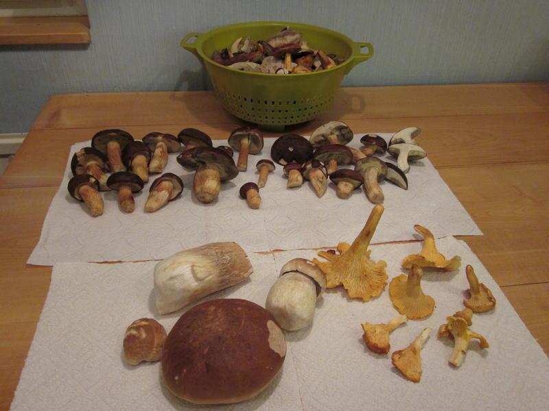 pilze sammeln hamburg