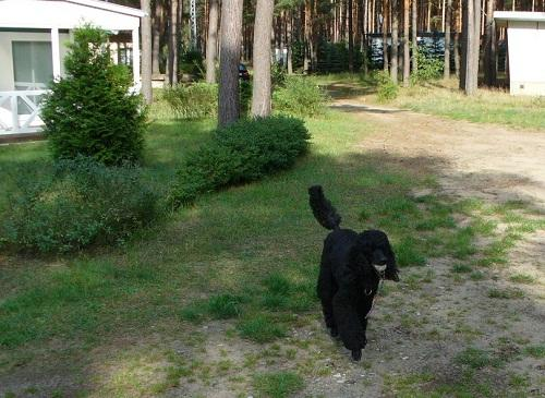 spreewald urlaub mit hund