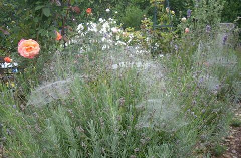 Nebel in einem wundersch nem sp tsommer seite 1 for Gartengestaltung verwunschen