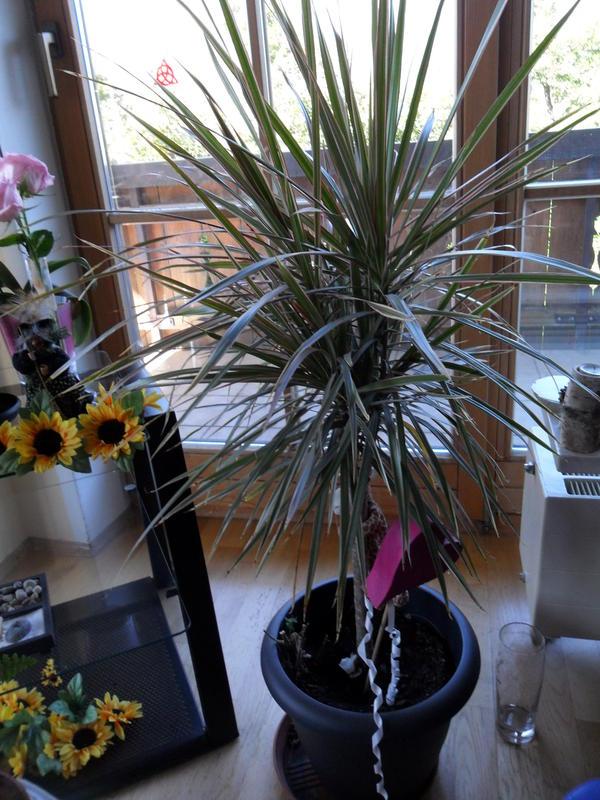 welche pflanzen sind das und sind sie giftig katzen forum. Black Bedroom Furniture Sets. Home Design Ideas