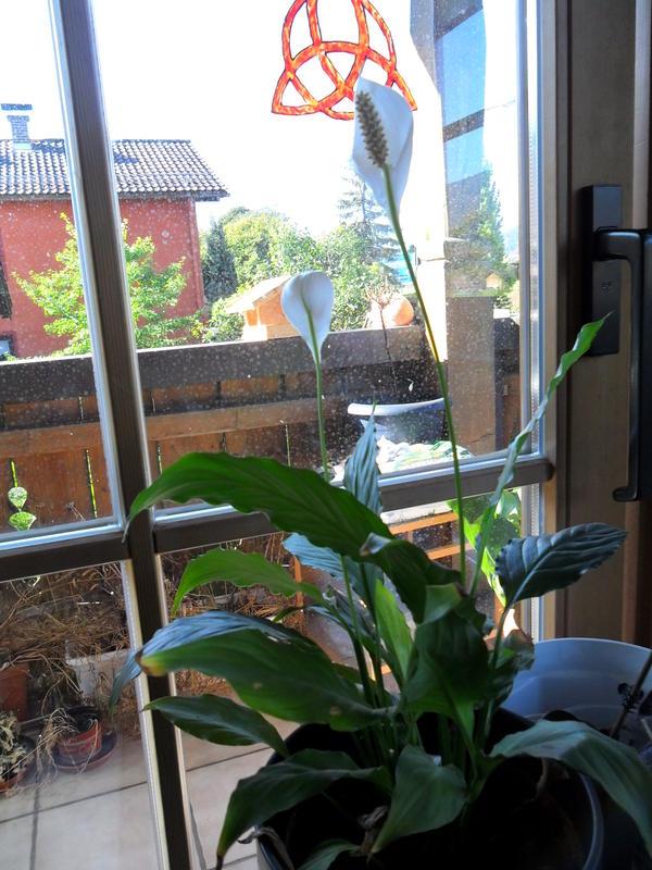 katzen forum welche pflanzen sind das und sind sie giftig. Black Bedroom Furniture Sets. Home Design Ideas
