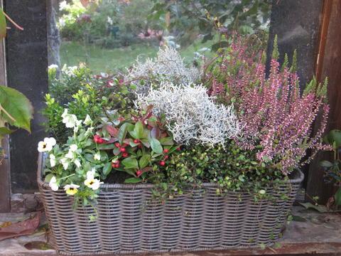 ... im Herbst? - Seite 1 - Terrasse & Balkon - Mein schöner Garten online