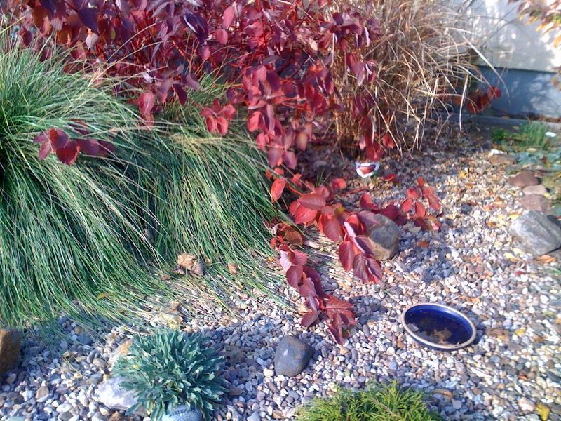 Umgestaltung in ein kiesbeet page 2 mein sch ner garten forum - Drainage garten lehmboden ...