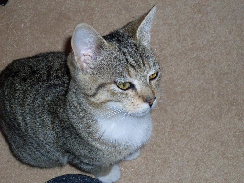 Wir suchen ein neues Zuhause (Katzen) - Seite 4 8621443isn