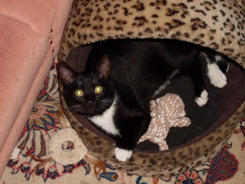 Wir suchen ein neues Zuhause (Katzen) - Seite 4 8621446xxe