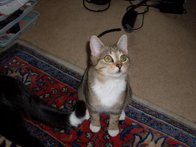 Wir suchen ein neues Zuhause (Katzen) - Seite 4 8621447ljc
