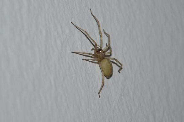 Spinnen - Was macht ihr? - Seite 5 8634830mrh