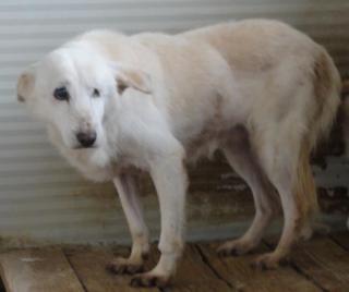 Hunde aus Italien suchen dringend Plätze!!! Ein ganzes Leben im Canile! - Seite 3 8892211dun