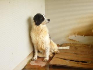 Hunde aus Italien suchen dringend Plätze!!! Ein ganzes Leben im Canile! - Seite 3 8899825was