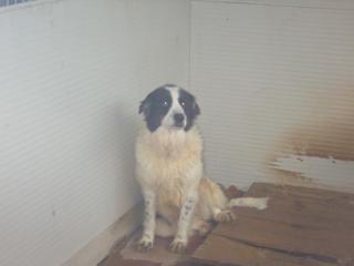 Hunde aus Italien suchen dringend Plätze!!! Ein ganzes Leben im Canile! - Seite 3 8899829miz