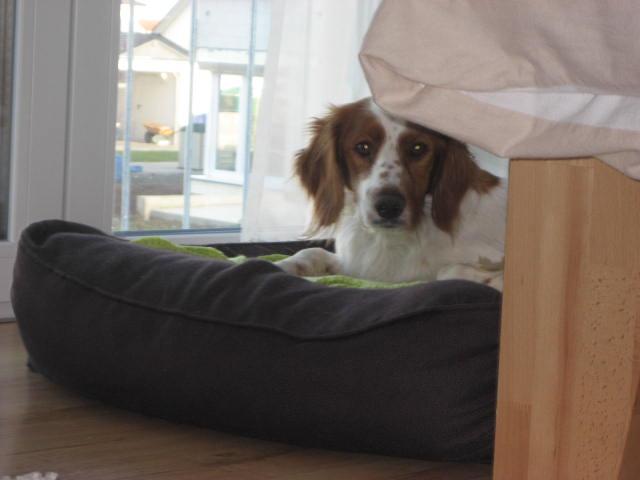 Julian, jetzt Finn hat sein Sofa gefunden 9116094gzq