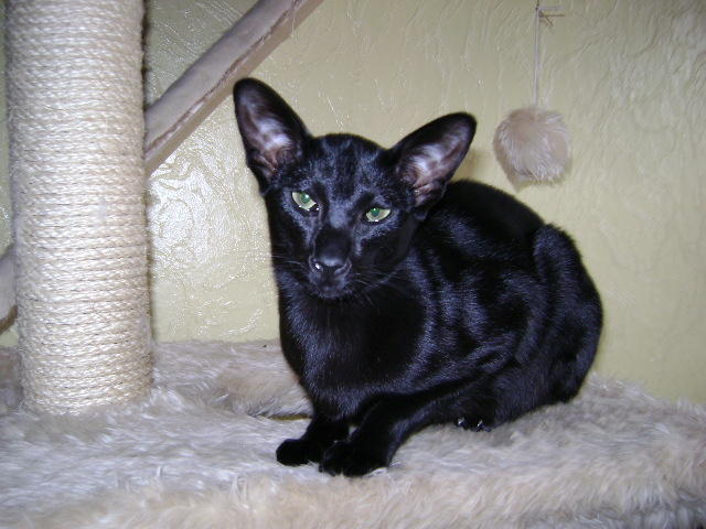 Wir suchen ein neues Zuhause (Katzen) - Seite 5 9183314quo