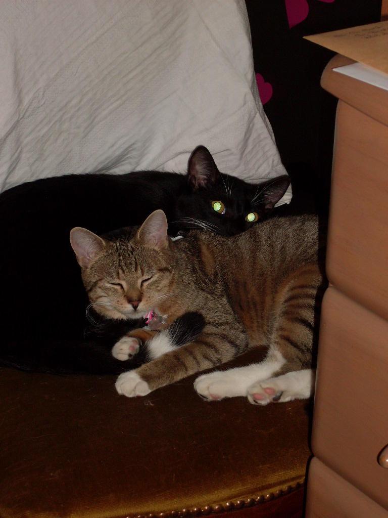 Wir suchen ein neues Zuhause (Katzen) - Seite 5 9185386pbd