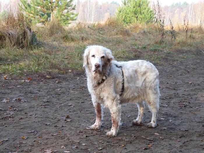 Kate Lebensbegleiter Hund -- Motive Kitchenham zur