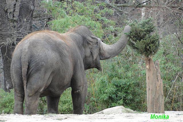 Elefantses Schamhaar elefant - gutefragenet