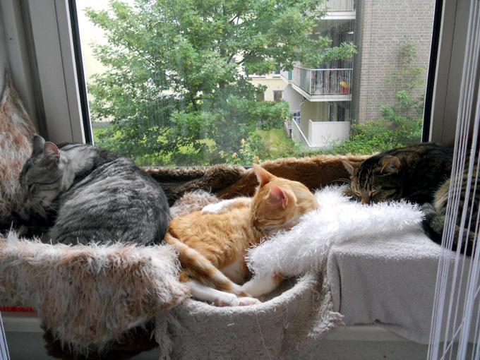 wo bekommt man katzenk rbchen f r 2 katzen katzen forum. Black Bedroom Furniture Sets. Home Design Ideas