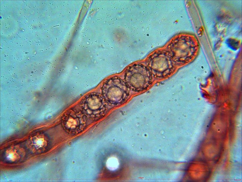 Mikroskop usb kamera im test euromex dc