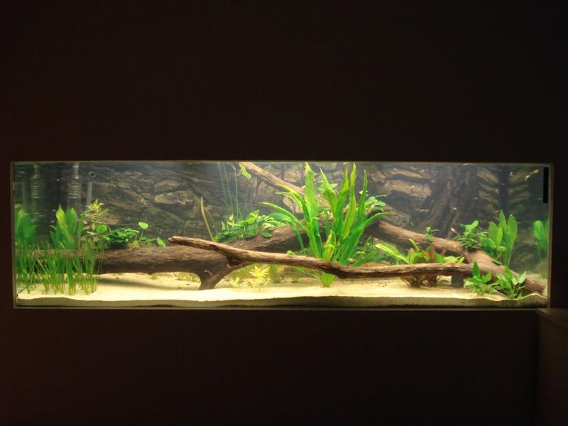 960 liter becken aquarium forum. Black Bedroom Furniture Sets. Home Design Ideas