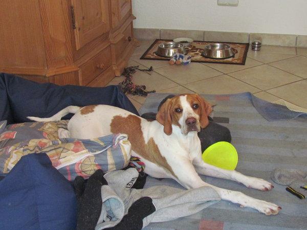 Bella - ehemals Emma - Seite 2 9555366fih