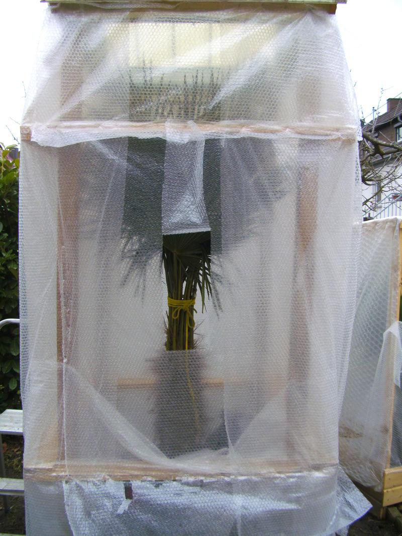 palmen und co einblicke in den winterschutz. Black Bedroom Furniture Sets. Home Design Ideas