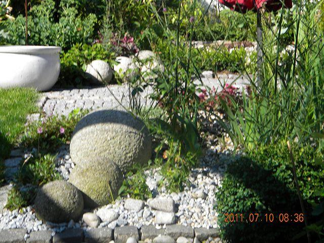 pflanzen kiesgarten – spinjo,