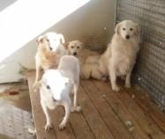 Hunde aus Italien suchen dringend Plätze!!! Ein ganzes Leben im Canile! - Seite 3 9650268tuo